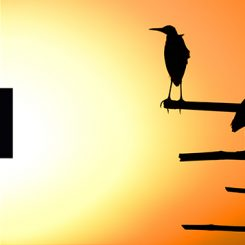 Silhouetted Birds-Canvas-Front