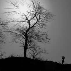 A tree and a Photographer-Canvas-Front