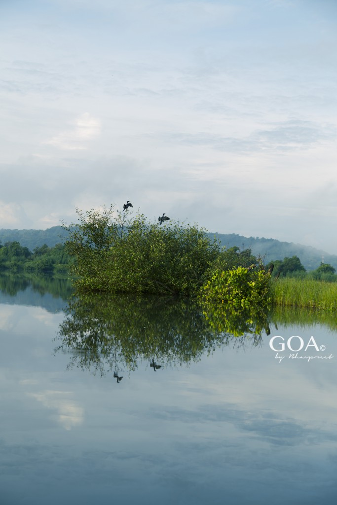 Goa-Olaulim Backyards-Photography